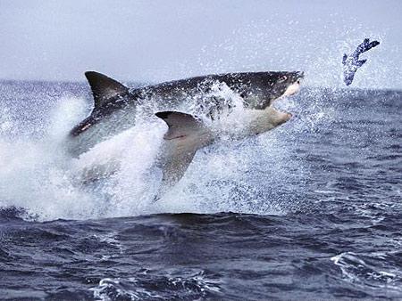 Auch das Internet ist ein Haifischbecken. Vorsicht, was ihr veröffentlicht!