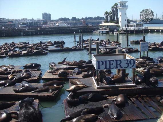 Das Pier 39. Die Kollegen auf den Brettern sind übrigens keine Touristen. Grins...