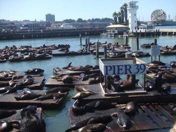 Das Pier 39 in San Fransisco. Ungewöhnliche Eindrücke!